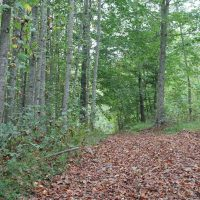 42.5 Acres in Macon County, Tennessee at  for 79900.0000